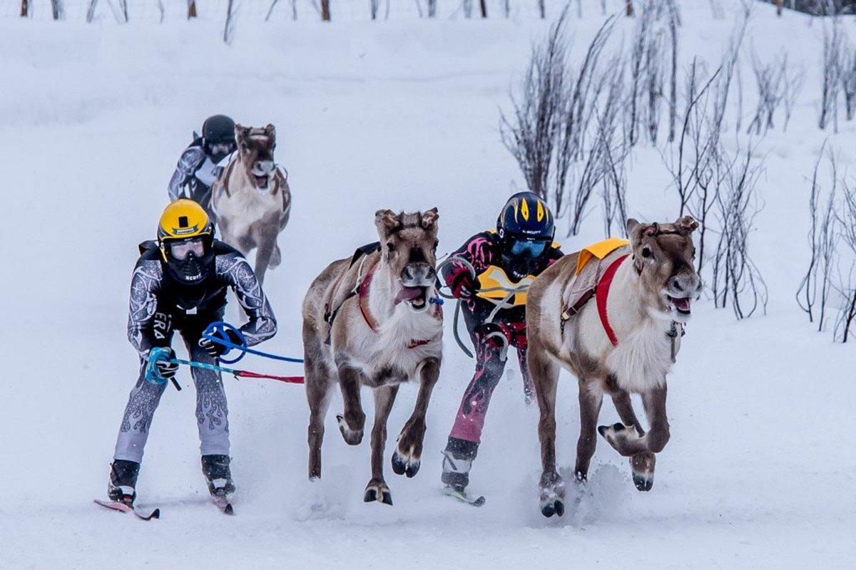 Uno shot dalla Lapponia: corsa di renne e sciatori Life&People Magazine lifeandpeople.it
