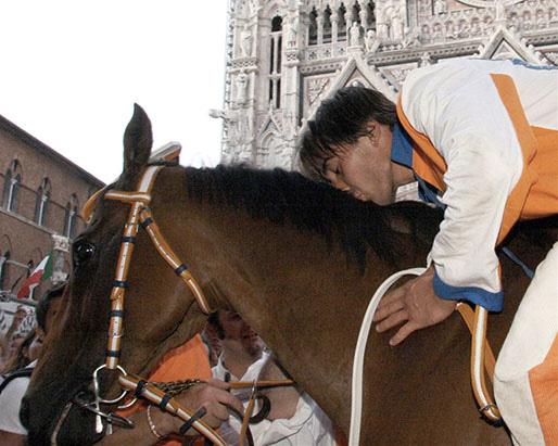 Il cavallo al Palio di Siena