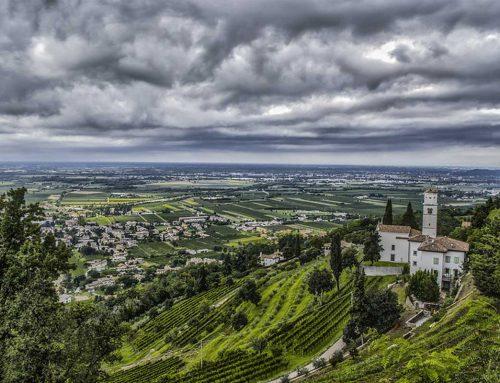 Il vino della Pace di Cormons: l'unico prodotto da oltre 550 vitigni