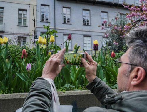 I fiori del male dell'Italia colpita dal virus