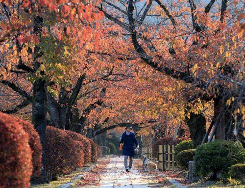 Quali sono le curiosità dell'equinozio d'autunno?