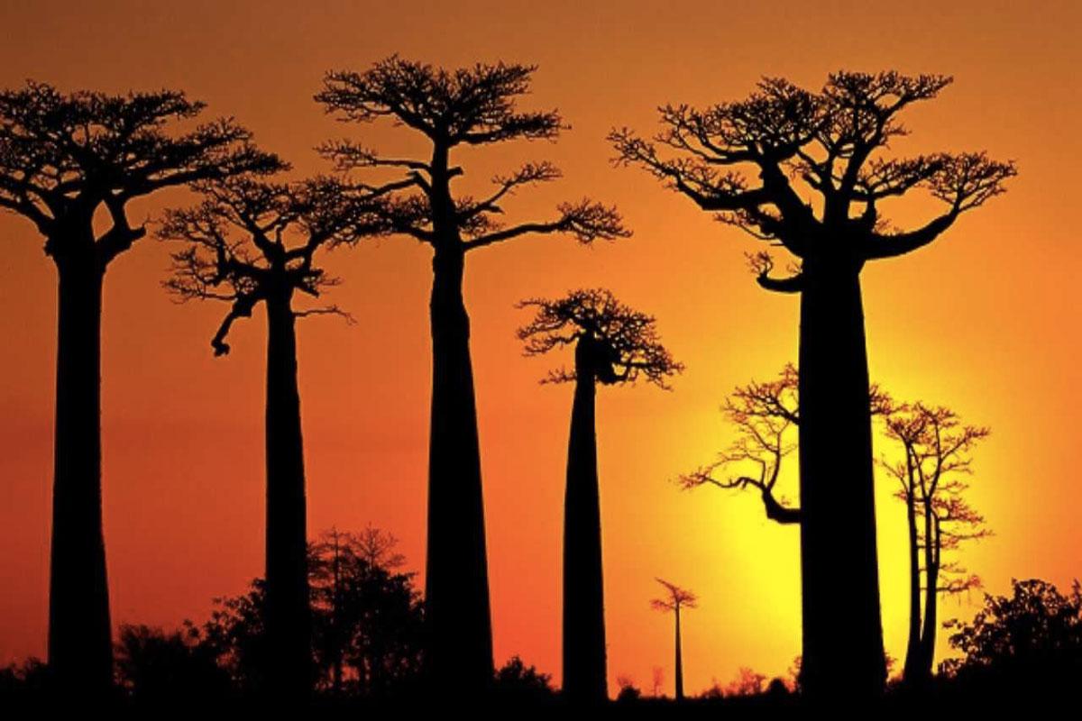 frutto del baobab Life&People Magazine LifeandPeople.it