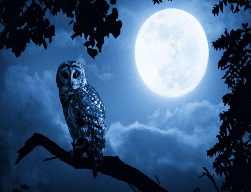 Occhi al cielo per Halloween: ammireremo la spettrale luna blu