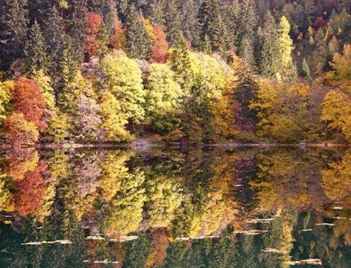 I colori del foliage nel design: l'autunno arreda la casa