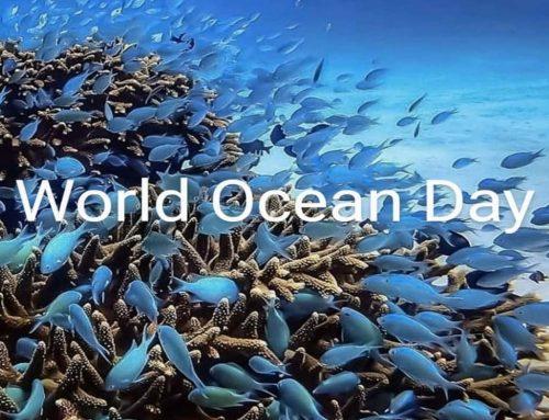Giornata Mondiale degli Oceani: le iniziative moda green