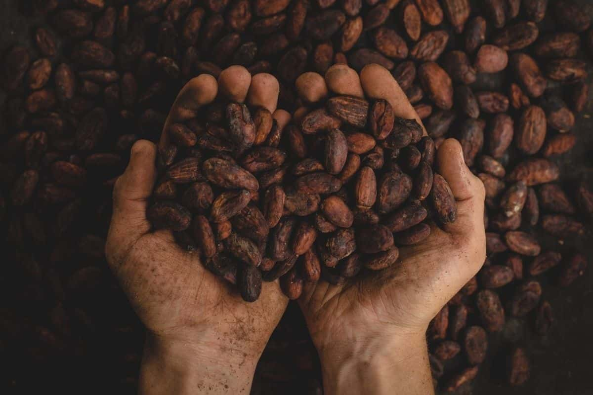 cioccolato cacao Life&People Magazine LifeandPEople.it